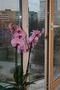 Окна пластиковые в Херсоне